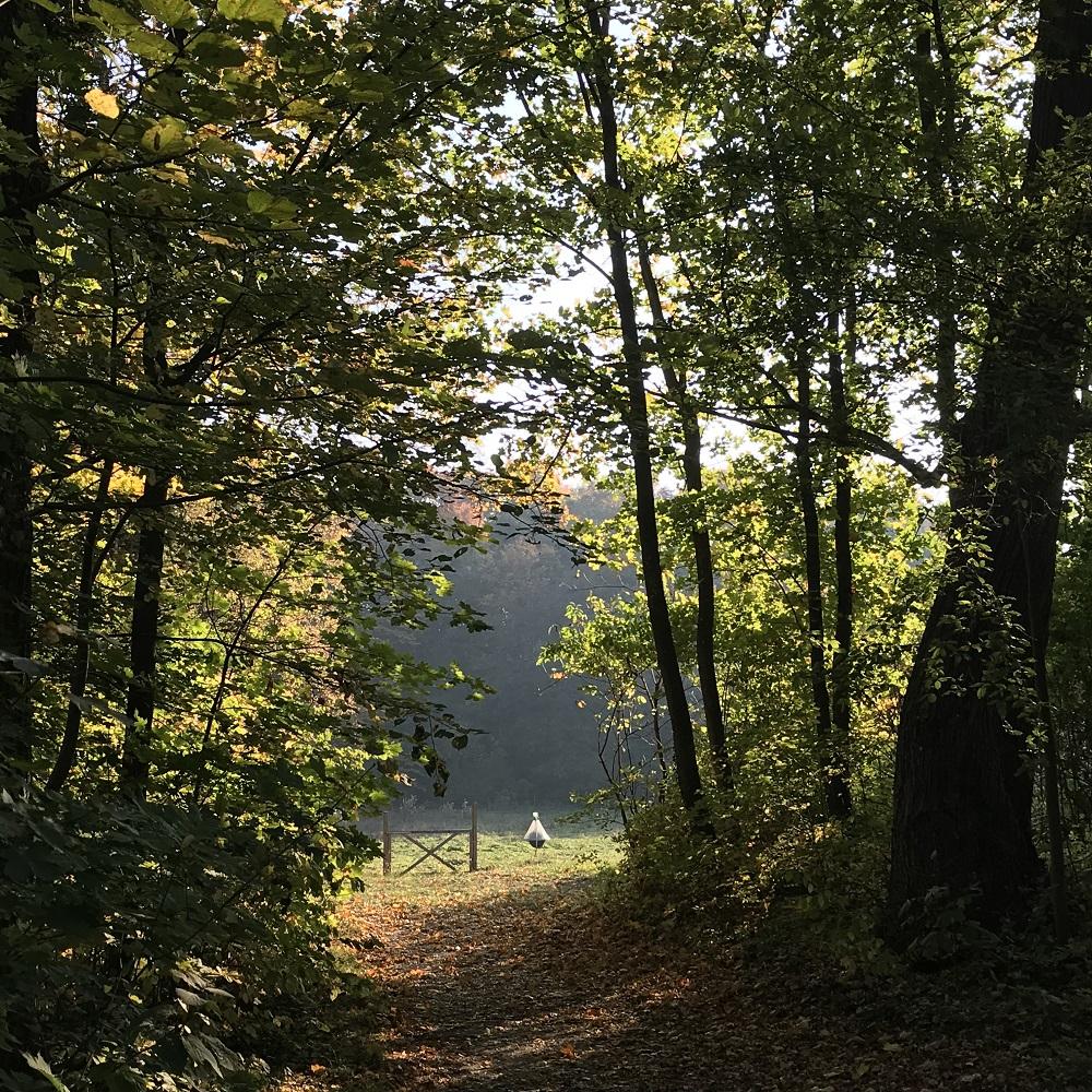 Schlosspark Mühlbach