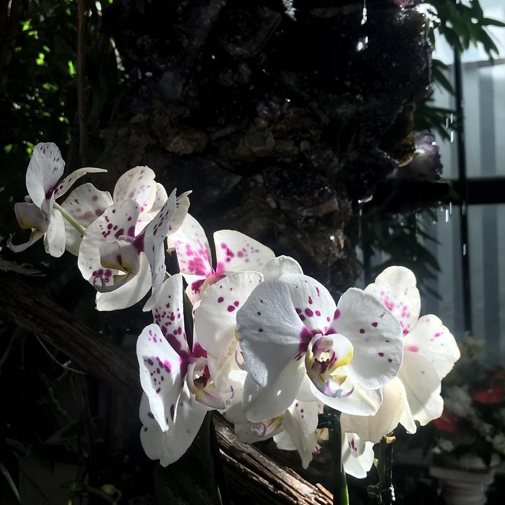 Orchideenausstellung 2019 Stift Klosterneuburg