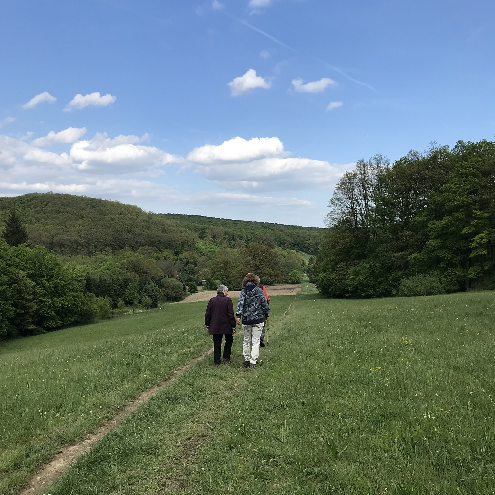 zurück im Gütenbachtal