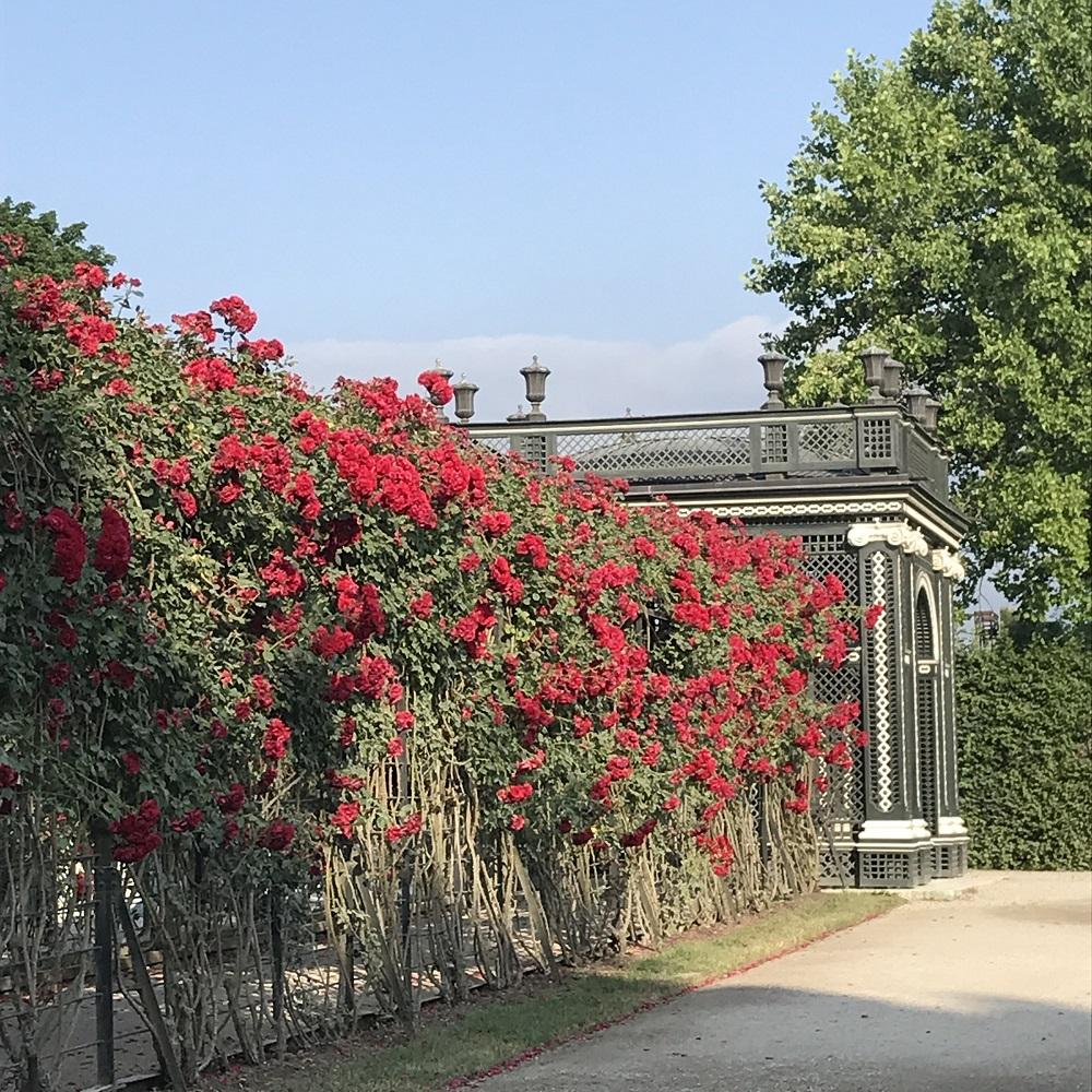 Kammergarten