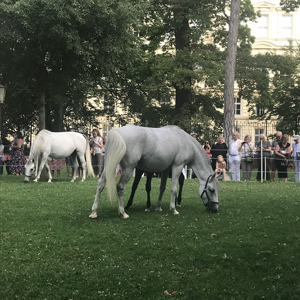 Lippizaner im Burggarten